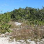 Important Questions to Ask When Buying Land in Belize